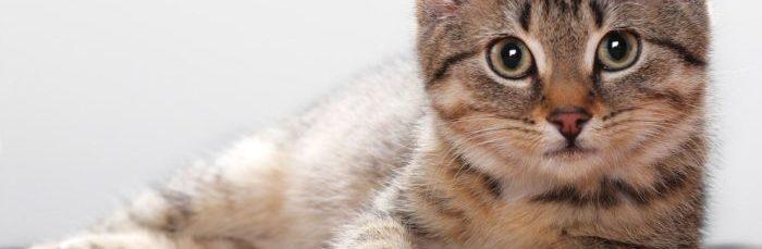 Пищевая аллергия у кошек: симптомы и лечение — Кот Обормот