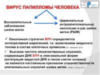 Инфографика посвященная вирусу папилломы человека
