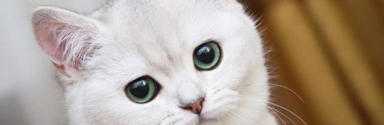 Симптомы и лечение блошиного дерматита у кошек