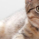 Виды, симптомы и лечение дерматита у кошек