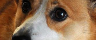 Папилломы у собак